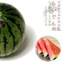 らいでんスイカ 最高ランク秀品 2L 2玉入り≪11〜14kgすいか≫送料無料!※