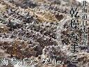 乾燥ナマコA級品20g【Aランク】北海道産乾燥なまこ 金ん子