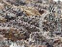 乾燥ナマコA級品100g【Aランク】北海道産乾燥なまこ 金ん