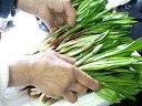 生行者にんにく(ぎょうじゃ)【500g】送料無料!天然100%!北海道の野山に群生!幻の山菜。収…
