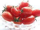 フルーツミニトマト『アイコ』 2kg【北海道産】♪糖度8度以上♪送料無料!大よその出荷時期は...