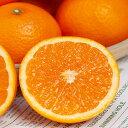 【送料無料】【西智園芸】≪わけあり≫清見オレンジ5k箱入り(サイズ混合)※わけあり商品です。【北海道・沖縄・離島は追加送料1000円がかかります。】