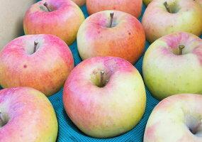 フルーティーな甘さで注目のりんご「名月」