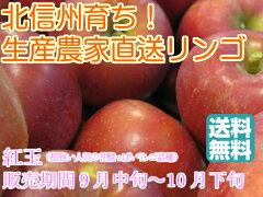 昔懐かしく、生産量も少なくなってしまった希少なりんご【紅玉】【送料無料】【訳ありリンゴ】...