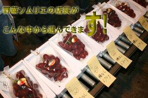 [石川県産] 国内最大級の粒 甘くてジューシー 8月25日前後から発送しますルビーロマン 1房入...