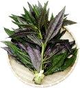 加賀野菜 赤紫色の葉にはポリフェノールが6月〜10月の期間限定販売です。金時草 200g 露地物