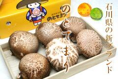 石川県産 原木生椎茸 のと115 最高級ブランド 「のとてまり」 1箱 6~8枚入 平成23年…