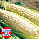 北海道産 ピュアホワイト 北海道産の白い とうもろこし「ピュ...