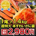 全商品ポイント5倍なまらでかいっ!【厳選】北海道加工 超特大 本ずわいがに姿 1.4kg×1尾入【送料無料】かに/カニ/蟹/ズワイ - カニのキタウロコ