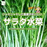 サラダ水菜(みず菜) 栽培期間中農薬不使用・化学肥料不使用 埼玉県産 1袋 ※根元の茎の部分は切ってある場合があります