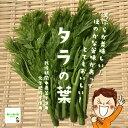 タラの葉 栽培期間中農薬不使用・化学肥料不使用 埼玉県産 1袋♪