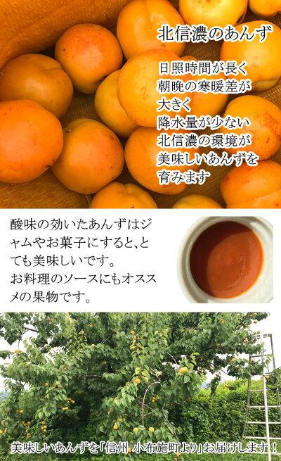 送料無料加工用あんずアプリコット減農薬長野県産小布施4キロ