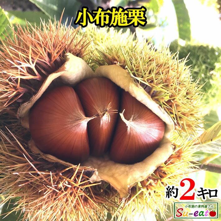 フルーツ・果物, 栗 9 2 200