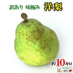 Su-eat農場直送、鮮度抜群の洋梨です♪