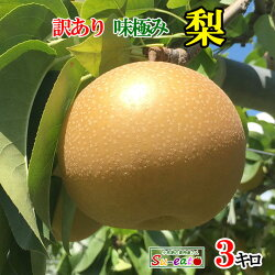 夏の果物の王様【梨】