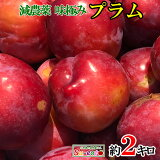 7月上旬〜中旬発送 大石早生 プラム すもも 長野県産 2キロ レビューを書いたら200円クーポン