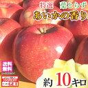 11月下旬発送 特選 あいかの香り りんご 減農薬 10キロ