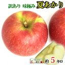 8月上旬発送 朝どれ 夏あかり 訳あり りんご 減農薬 長野県産 約5キロ おまけ付き レビューを書いたら200円クーポン