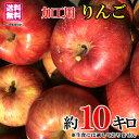 ご予約受付中 品種おまかせ 加工用 葉とらず りんご 減農薬...