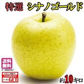 【送料無料】特選葉とらず味極みりんごシナノゴールド減農薬10キロ