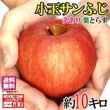 11月下旬 小玉サンふじ りんご 減農薬 長野県産 10キロ