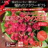 大輪の真紅のバラの花束 (バラ 薔薇)30本 記念日 還暦 プロポーズ フラワーギフト 専用ギフトボックスにてお届け ラッピング無料 送料無料