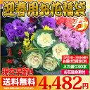 【送料無料】【早割】お正月 の 花 迎春 おまかせ30本 福袋 松 千両 が必ず入ったメガ盛り 切り花 福袋