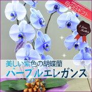美しい紫色の胡蝶蘭