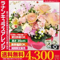 送料無料2月のおHana/ラナンキュラスフラワーアレンジメントに最適健やか誕生日記念日花ギフトプレゼント専用ギフトボックスでお届け