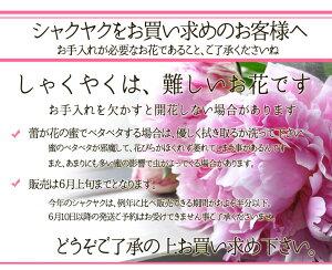 【送料無料】今だけのとっておき。シャクヤク(芍薬)のフラワーアレンジメント暑気払いお祝いフラワーギフト