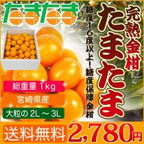 店長激オシ!!ビタミンなど栄養分が豊富!古くから伝わる風邪の民間薬「金柑」3kg