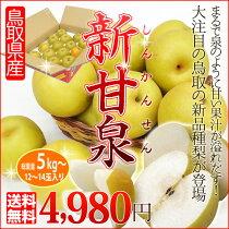 送料無料/鳥取県の新品種!糖度13度以上の激甘ハイブリッド梨「新甘泉(しんかんせん)」5kg