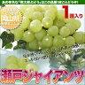お中元 フルーツ ギフト 送料無料 岡山県産 ぶどう 瀬戸ジャイアンツ 種無しで皮ごと食べられる葡萄 お中元果物ギフト フルーツギフト