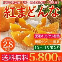 店長激オシ送料無料!柑橘の新品種!ゼリーのようなプルプル果肉!愛媛産みかん『紅まどんな』2.8kg(10〜15玉)