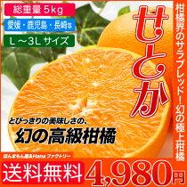 送料無料】こんな柑橘あったの?幻の高級柑橘「せとか」(総重量約5kg)