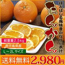 店長激オシ送料無料!甘みが詰まった柔らかい果肉!鹿児島県産「たんかん」(L〜2Lサイズ総重量約5kg)
