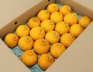 【送料無料】柑橘の1番人気「デコポン」(訳あり家庭用)5kg