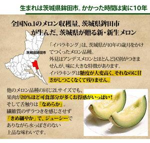 【送料無料】メロンの名産地茨城県が生んだ新メロン!「イバラキング」5〜6玉入り超特価