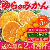 【訳あり】【送料無料】和歌山 由良産 みかん 5kg 【温州みかん】