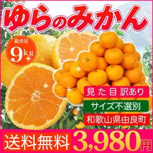 【送料無料】ギュっと詰まった濃厚な味わい!ゆら(由良)のみかん訳ありたっぷり7kg