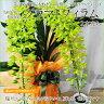 夏のフラワーギフトに最適◆ライトグリーンの花弁が爽やか!洋ラン グラマトフィラム 2本立 【蘭ギフト/送料無料】