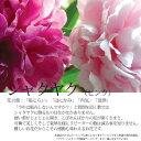 【シャクヤク】お好きなお花をお好きな数だけHanaファクトリーだから出来る新鮮イキイキ、旬の...