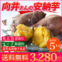 訳あり さつまいも 安納芋 送料無料 鹿児島県種子島産さつまいも 濃厚な味わいの安納芋(蜜芋)訳あり・無選別5kg 焼き芋はもちろん干し芋にも! あんのういも・あんのんいも