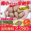 安納芋 種子島産 極小サイズ 送料無料 訳あり・5kg さつ...