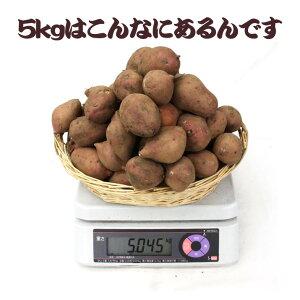 感謝SALE!店長激オシ送料無料!サイズ無選別の「安納芋」たっぷり5kgまとめ買い【蜜芋】