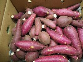 ★追熟品★紅はるかサツマイモ家庭用小サイズ7kgさつま芋さつまいも【送料無料】