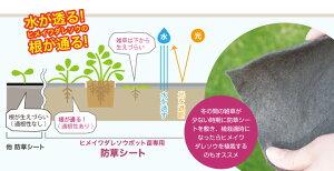 ヒメイワダレソウポット苗専用防草シート(透水性通根シート)。ポット苗の根が広がるまでの雑草を抑制します。根が通る素材なのでしっかり根が張ります。幅2M×長さ10M