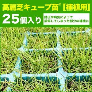 補植用高麗芝キューブ苗25個入り1ポット60円(税抜)