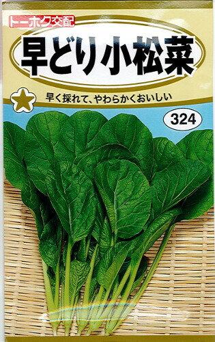 早どり小松菜 8ml (種)