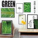 【自然を飾る】アートポスター GREEN A3(29.7x40センチ)...